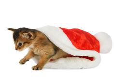 Merry Christmas Cat with Santa hat on white Stock Images