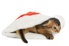 Merry Christmas Cat with Santa hat on white Royalty Free Stock Photo