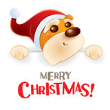 Merry Christmas! Christmas puppy with big sign. Stock Photography
