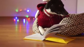 Merry Christmas, Clever dog wearing glasses and reindeer costume, reading the book. stock video
