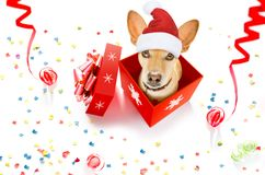 Merry christmas dog in a box royalty free stock photos