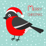 Merry Christmas greeting card. Bullfinch winter red feather bird. Santa hat. Candy cane text. Cute cartoon funny character. Baby c Royalty Free Stock Images