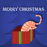 Merry Christmas greeting card cat in box Royalty Free Stock Photo