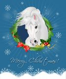 Merry Christmas greeting card with white horse Stock Photos