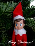 Merry Christmas Greeting from Elf on the Shelf stock images