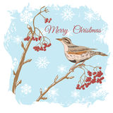 Merry Christmas Greetings. Decorative background with illustration of the bird stock illustration