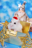 Merry christmas from hamster Stock Photos