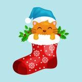 Merry Christmas and happy new year, animals holiday Cat in Santa xmas Sock Vector Illustration Stock Photo