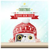 Merry Christmas and Happy New Year background with cat standing behind window Royalty Free Stock Photos