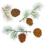 Happy New Year and Merry Christmas 2018_27. Merry Christmas and happy New Year background. Vector image of coniferous branches with cones on a white background Royalty Free Stock Photos