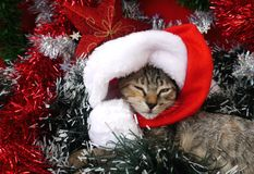Merry Christmas and a happy new year Cards cats Royalty Free Stock Photo