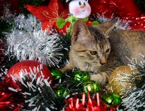 Merry Christmas and a happy new year Cards cats Stock Photo