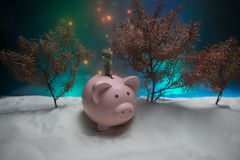 Merry Christmas and happy New year. Chinese new year of the Pig, symbol 2019 for greetings card. soft selective focus. Toy pig in. The branches of spruce. Pink royalty free stock photo