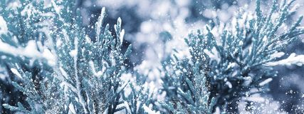 Winter snow background. Spruce in the snow. stock photo
