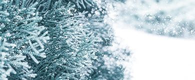 Winter snow background. Spruce in the snow. stock photos