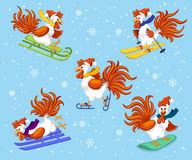 2017 Merry Christmas and Happy New Year Greeting Card with Cute Funny Rooster Ice Skating , snowboarding, skiing, riding sled unde. R the Snow Vector Royalty Free Stock Photo