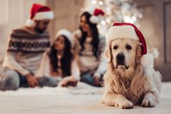 Family with dog on New Year`s Eve. Merry Christmas and Happy New Year! Happy family with dog labrador retriever are waiting for the New Year in Santa Claus hats royalty free stock images