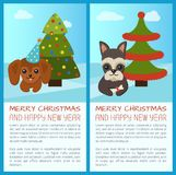 Merry Christmas Pine Tree Set Vector Illustration. Merry Christmas and Happy New Year, placards with headlines and text sample, pine tree with star and dog with Stock Photos