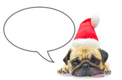 Merry christmas and happy new year 2017 Postcard with Pug dog. Sleep rest in Santa Claus hat with copy space for label text on speech balloon Stock Photography