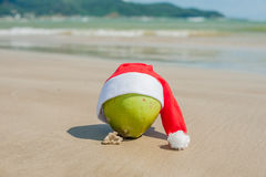 Merry Christmas and Happy New Year on the summer beach. Coconut in santa hat. Palms and blue sky on the background.  Royalty Free Stock Image