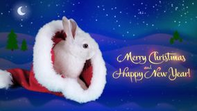 Merry Christmas and Happy New Years greeting card with text. Funny bunny washing his face in the Santa Claus hat, winter night background with snowfall stock video