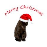 Merry christmas kitten hat humor Stock Photos