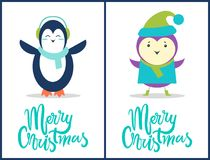 Merry Christmas Penguin, Bird Vector Illustration. Merry Christmas, collection of compositions made up of images of penguin with scarf and bird with green hat Stock Images