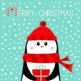 Merry Christmas. Penguin holding gift box present. Red hat and scarf. Happy New Year. Cute cartoon kawaii baby character. Arctic vector illustration