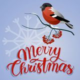 Merry christmas postcard. Bullfinch on a branch with christmas decorations. And berry royalty free illustration