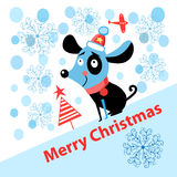 Merry Christmas puppy Stock Images
