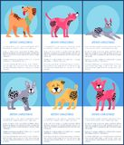Merry Christmas Set of Dogs Vector Illustration. Merry Christmas, set of images of dogs of different breed and colors, happy feelings and emotions combined with Stock Photography