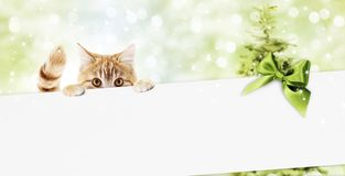 Merry christmas signboard or gift card for pet shop or vet clinic, ginger cat showing white card with green ribbon bow on blurred. Green xmas lights, copy space royalty free stock images