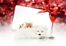 Merry christmas signboard or gift card for pet shop or vet clinic, white dog and ginger cat pets isolated on white card with red. Ribbon bow on blurred red xmas royalty free stock image