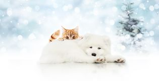 Merry christmas signboard or gift card for pet shop, white dog a. Nd ginger cat pets isolated on blurred xmas lights and tree, copy space blank background royalty free stock photos