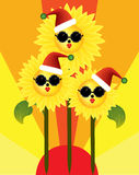 Merry Christmas from sunflowers in the sun Stock Image