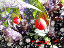 Merry christmass 3. Light bright fresh mild beauty greeting holiday christmass xmass celebrate celebration Stock Photos