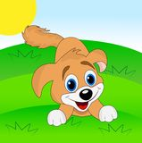 Merry dog on a green lawn Royalty Free Stock Images
