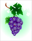 Merry grape. Merry ripe grape, hungs on branch under green sheet and drolly chatters Stock Photos