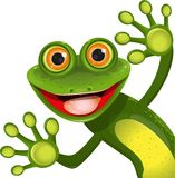 Merry green frog. Illustration, merry green frog with greater eye Royalty Free Stock Photography