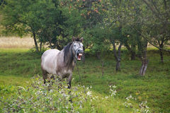 Merry horse. Royalty Free Stock Images
