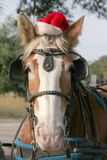 Merry horsemas. Forelorn looking horse with christmas hat on Royalty Free Stock Photos