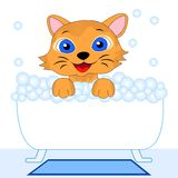 Merry kitten bathes in bath Stock Photography