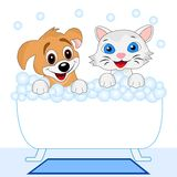 Merry kitten and dog bath in bath Royalty Free Stock Photos