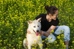 A merry laughing happy curly-haired brunette girl with glasses hugs a red-haired smiling akita inu dog in a field. royalty free stock images