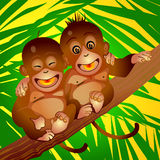 Merry monkeys. Two merry monkeys on a branch and background from the leaves of palm Stock Image