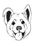 Merry muzzle dogs Stock Photo