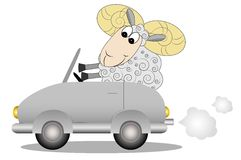 Merry ram after the helm of car Royalty Free Stock Photos