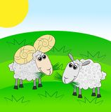 Merry ram and sheep on a green lawn Stock Image