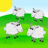 Merry  sheep graze on a green lawn Stock Photography