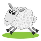 Merry  sheep hurries on a green lawn Royalty Free Stock Photos